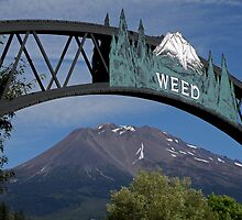 Welcome to Weed, California that is! by Patty Boyte
