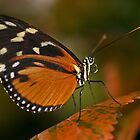 Fall Butterfly by Yvette Bielert