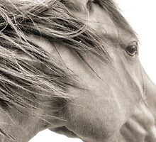 Spirit Wind Horse Rescue, www.spiritwindhorserescue.com by Vendla