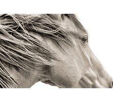 Wind Blown Photographic Print