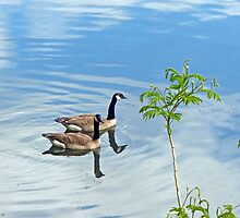 Beautiful Day for a Swim by Susan S. Kline