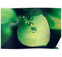 Drip drop drip drop drip drop Poster