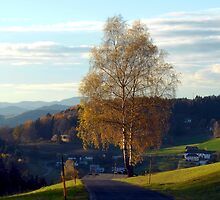 Tree, road and indian summer evening II | landscape photography by Patrick Jobst