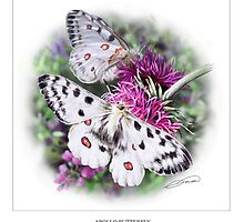 APOLLO BUTTERFLY by DilettantO