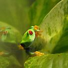 Green Frog by ChauTW