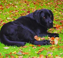 Watching the Leaves Fall by trish725