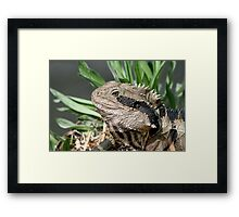 Water Dragon # 2 Framed Print