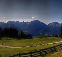 A Cow's Paradise by Stefan Trenker