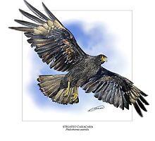 STRIATED CARACARA 4 by DilettantO