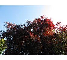 Natural Colour Photographic Print