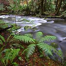 Silver River by Donovan wilson