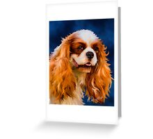 Chelsea - Cavalier King Charles Spaniel Greeting Card