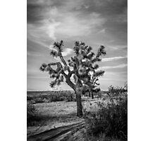 AV Joshua Tree Photographic Print