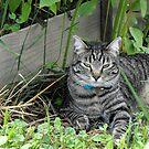 Jasper enjoying some shade by Jan  Tribe