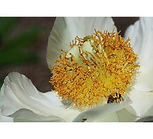 Do Bee Do Bee Do Photographic Print