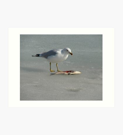 Seagull on the Mississippi River in Winter Eating A Fish Art Print