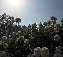 summer flowers by lolidk