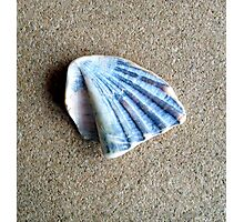 Just a Shell. Photographic Print