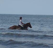 horses and sea by jackie martino