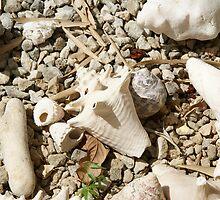 shells by Dirk van Laar