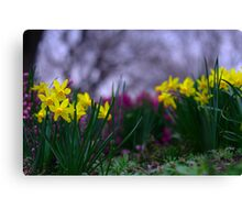 Daffodills on the Pastel Palette of Spring Canvas Print
