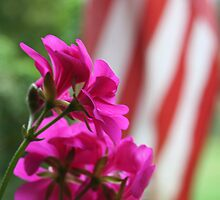 red, white and pink by debsrockine