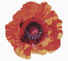 "Spectacular Poppy (Papaver Orientale ""Allegro"") by Philip Mitchell"