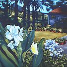 backyard, Mullumbimby by maria paterson