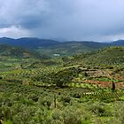 Argos Valley, Greece by George Parapadakis (monocotylidono)