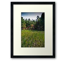 Fall Glade Framed Print
