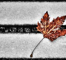 Fallen Leaf by V-Light