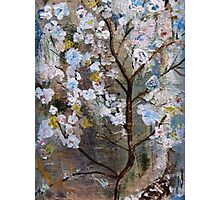 Cherry Blossoms Pink and Blue Photographic Print