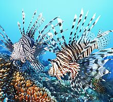 LIONFISH 1 by DilettantO