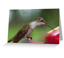 Female Hummingbird at the Nectar Feeder Greeting Card