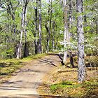 Dogwood Trail by Susan Russell