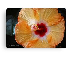 Hibiscus Yellow and Red Canvas Print