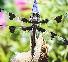 Large Spring Dragon Fly by Ashley Jones