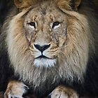 the Kings (and Queens) of the Jungle by Lisa  Kenny