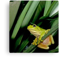 Green Tree Froggy Canvas Print