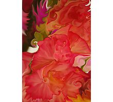 Gladiolus Abstract  Photographic Print