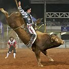 An Evening Bull Ride by Barrie Collins