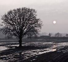 Tree On Rainy Day by Retep B