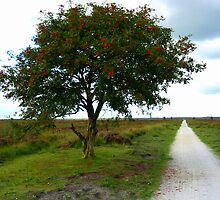 Rowan Tree in Summerfield by ienemien