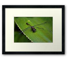 Dragonfly on leaf Framed Print