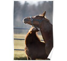 Horses, foal nuzzling mother Poster