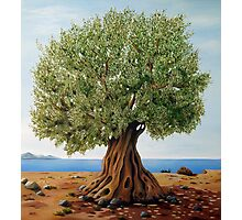 Olive Tree Photographic Print