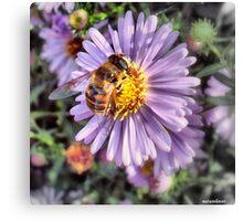 A Honey Bee Canvas Print