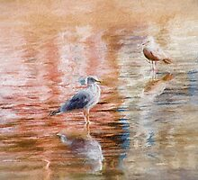 Seagulls - Impressions by Susie Peek