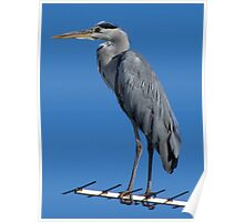 The Heron Poster
