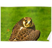 Falcon #2 Poster